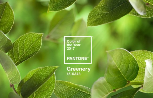 The Decorologist Announces 2017 Pantone Color of the Year