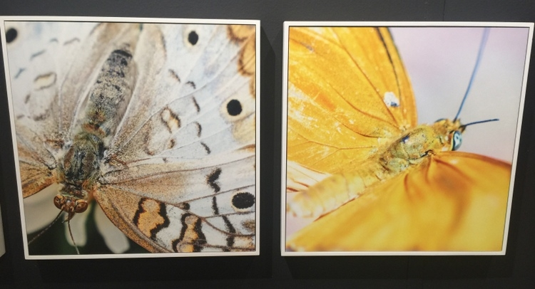 phylum design photographic art of butterflies by chris dunker at high point market